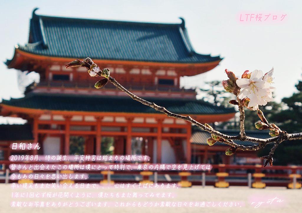 LTF桜ブログ#294