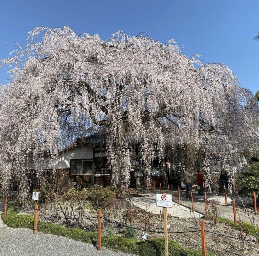 京都 本満寺