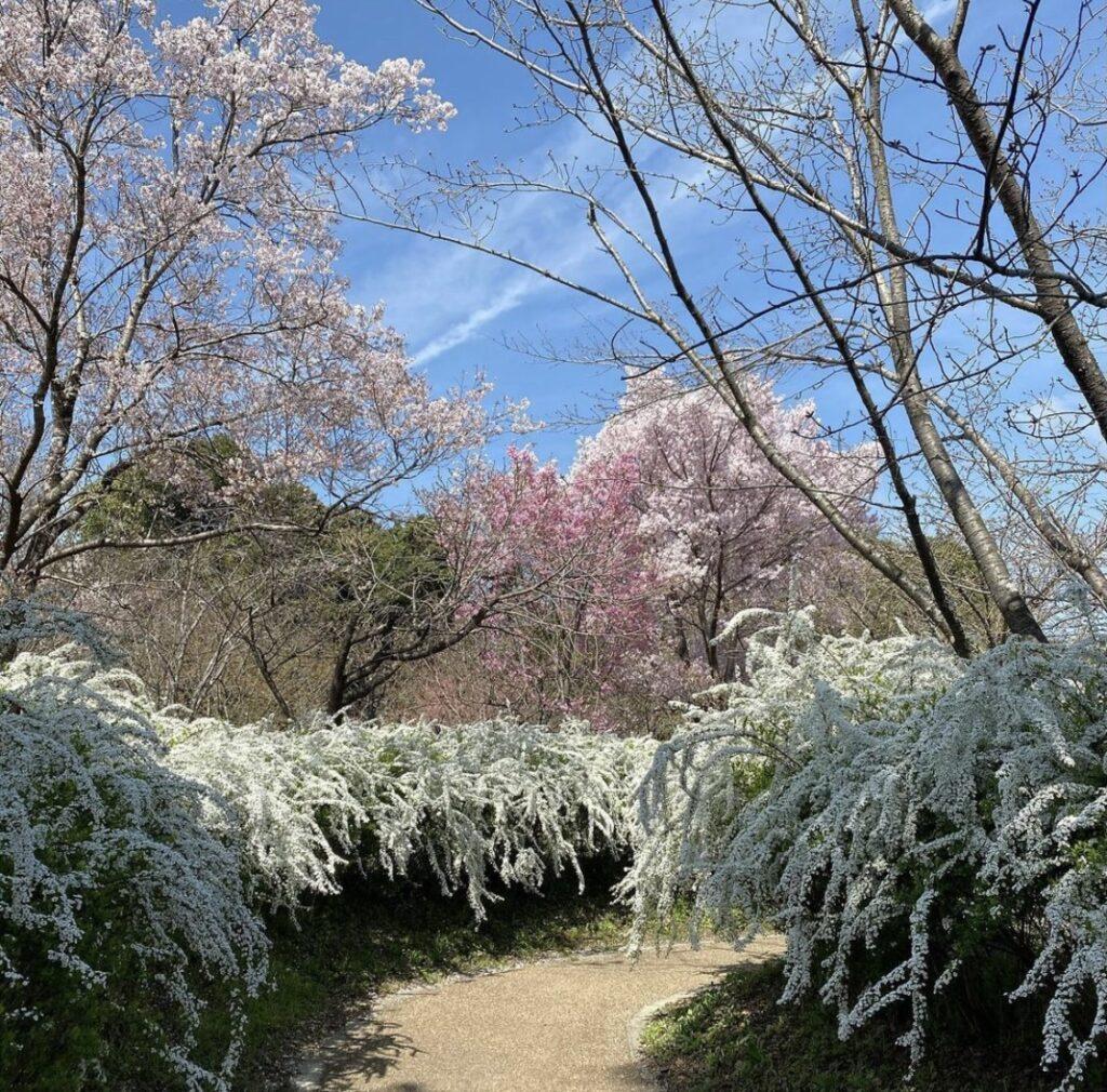 京都 植物園